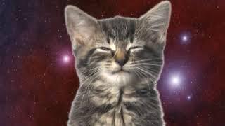 Милые котики клип космос