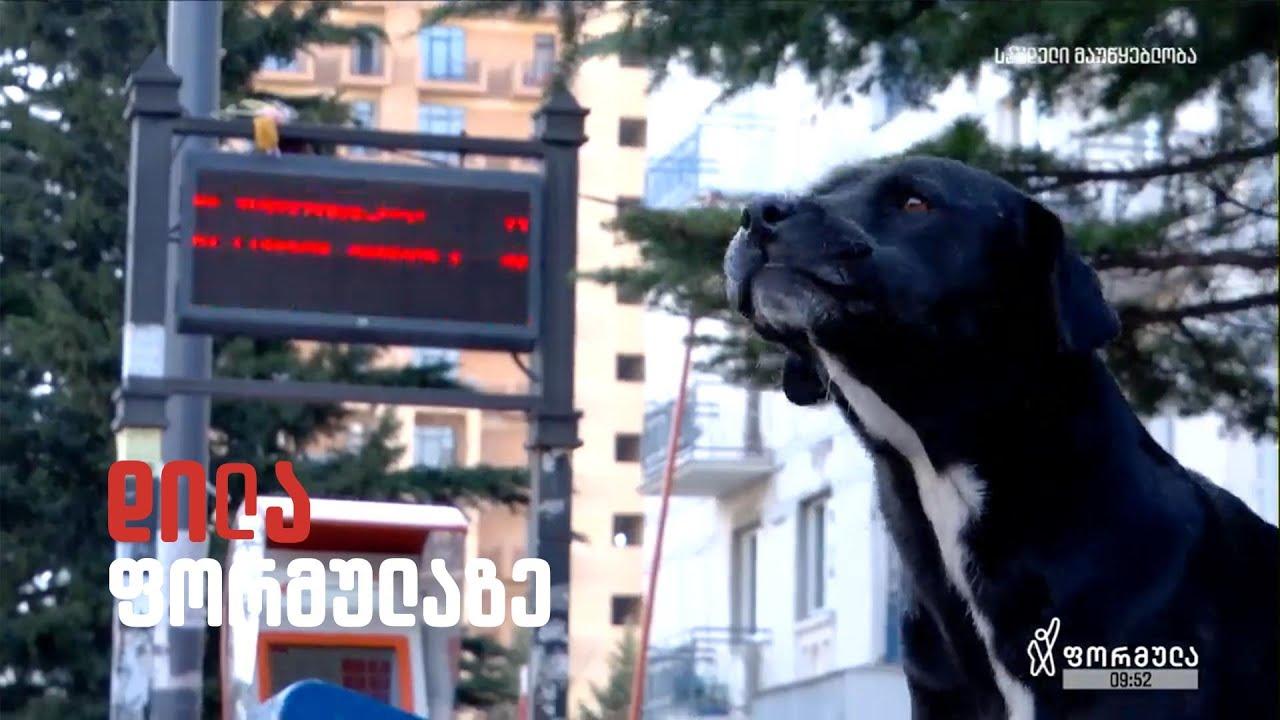 დიღომში მცხოვრები ჭკვიანი ძაღლი - ჯოდი