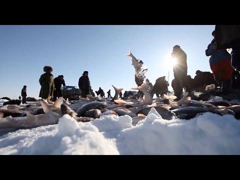 Winter Fishing Season Begins on Northeastern China's Chagan Lake