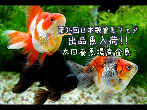 伊藤養魚場入荷情報】2016.4.12 ...