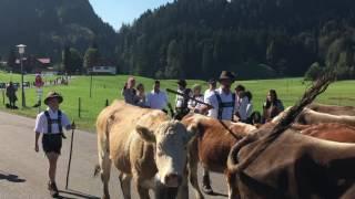 Obermaiselstein Viehscheid