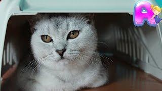 💖 СМЕШНЫЕ ЖИВОТНЫЕ КОШЕЧКА МАСЯ 🍼 🎀 🐈 VLOG / Покупаем все необходимое для кошек