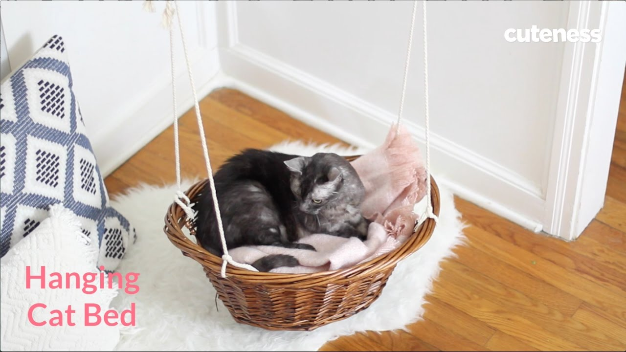 How To Get A Cat Into A Basket
