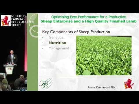 2014 NSch James Drummond 'Optimising Ewe performance for a productive sheep enterprise'