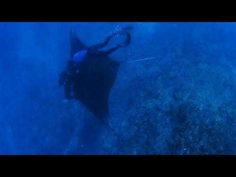 A Manta Ray Rescue