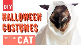 DIY Halloween Costumes | Ghost Costumes for Your Cat