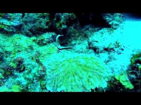 Mergulhos #26 e #27 - Bullen Bay e Blue Bay - Curaçao