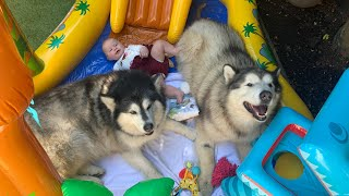 Giant Dogs And Baby Have a Pool Party!! [CUTEST VIDEO!] Mia's First Pool