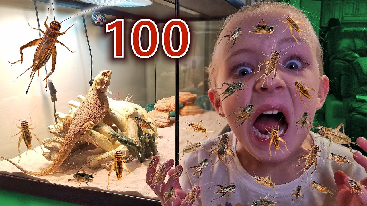 Download 100 Layers of Crickets! Trinity vs Mom (Crickets Escaped in Our House!!!)