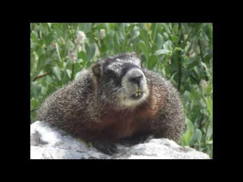 Yellowstone National Park - Native Fish Conservation Program Internship - Jesse Gordon