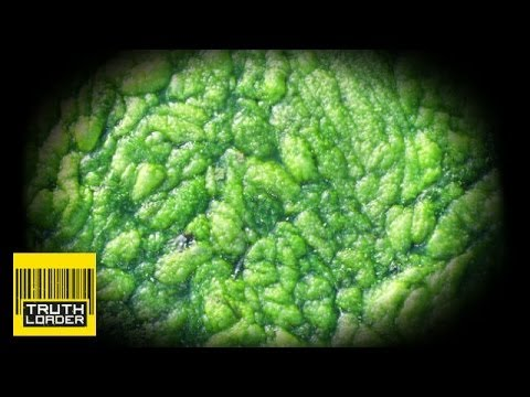Algae to crude oil - world's fuel problems solved? Truthloader