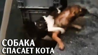 Собака спасает кошку из воды