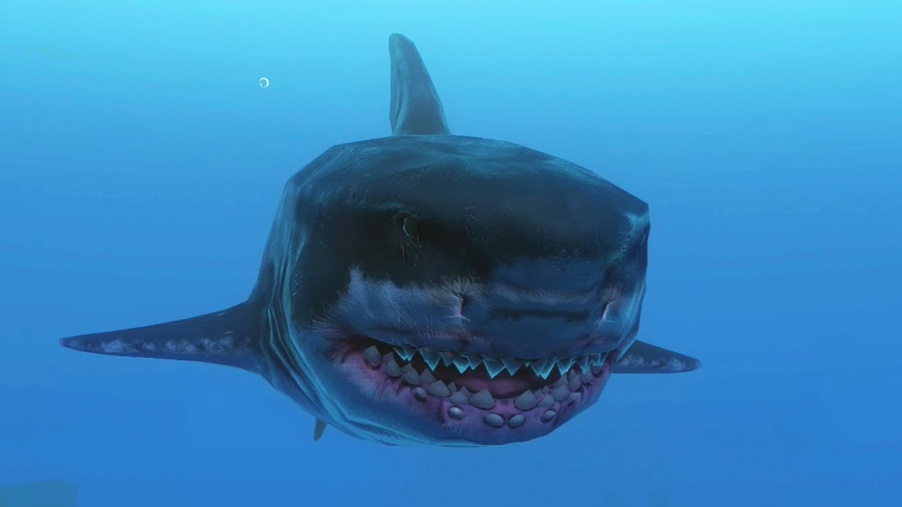 Great White Shark Attack  Feed And Grow Fish  Fan -3575