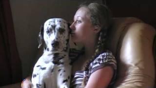 Funny Dalmatian - Falling Asleep!