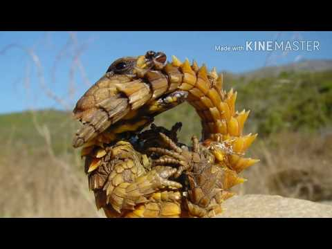 Top 10 Unknown Animals In The World
