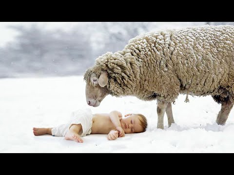 Спасая ВМЕРЗШУЮ в снег овцу, фермер ЗАМЕР от ШОКА, когда увидел, кого она СОГРЕВАЕТ