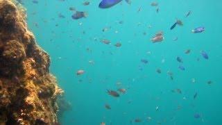 "skin diving 005-2 ""Mitsuishi"" Beach (真鶴 三ツ石海岸)"
