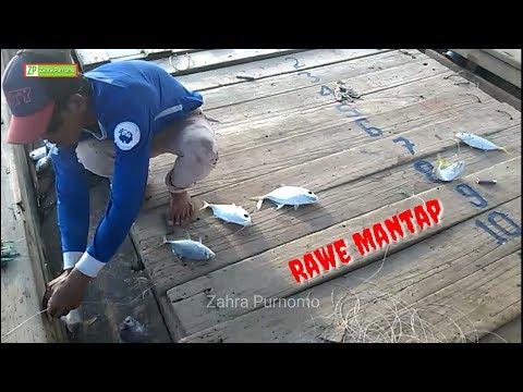 Ikan kelaparan.!Cukup mancing pake umpan tali rafia