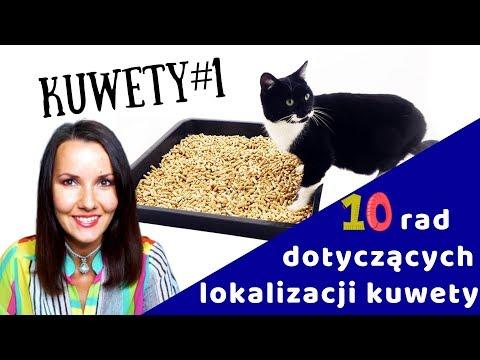 KUWETologia odc. 1 / 10 tipów: Gdzie postawić kuwety dla kota?