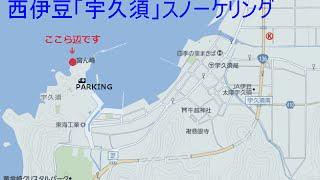 2014/8/23/14:00 晴れ/33℃】西伊豆の宇久須海岸でシュノーケル。防波堤...