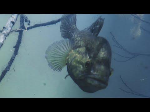 РЫБА МОНСТР ЧУТЬ НЕ ОТКУСИЛА ПАЛЕЦ!!! Подводная съемка