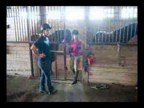 Stockbridge School of Agriculture Equine Management
