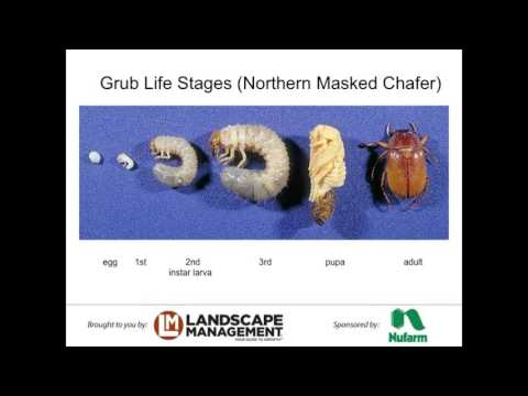 Webinar: Season-Long Grub Control