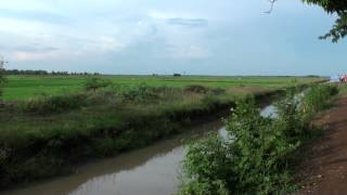 Water Irrigation Canal and Rice Fields - Cambodia Countryside