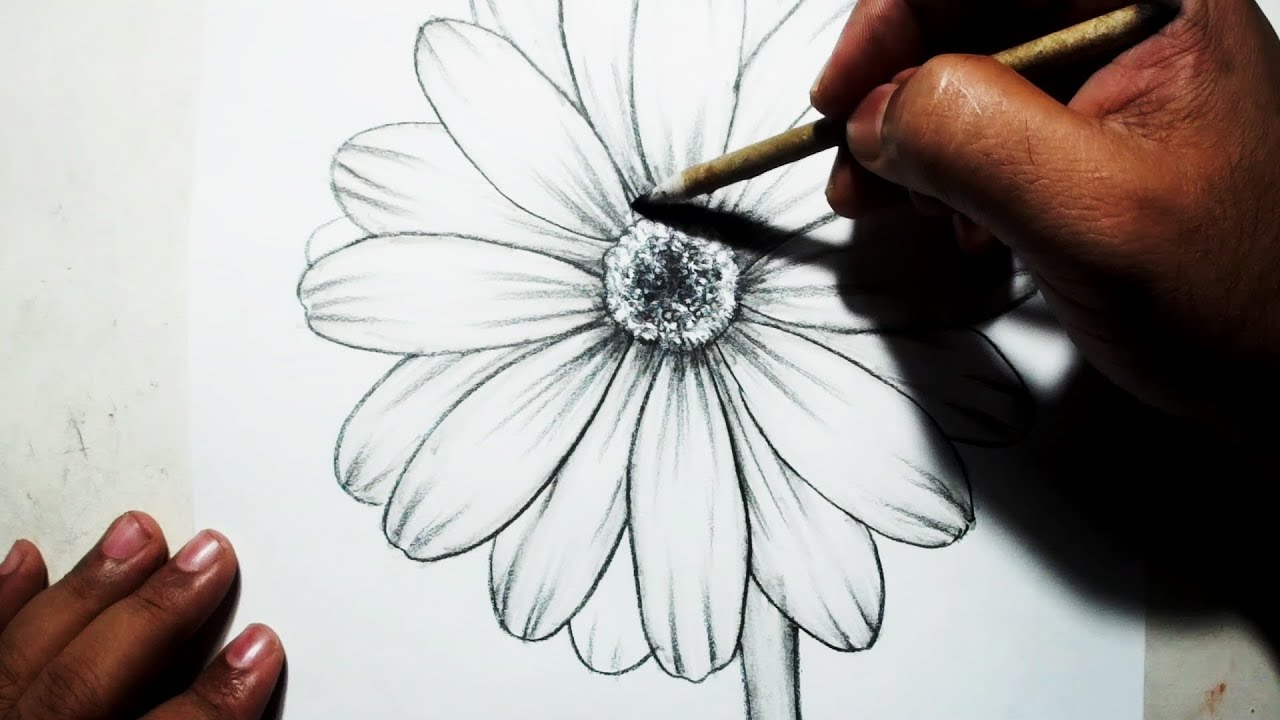 How to draw a flower easy pencil drawing