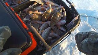 Не зря столько шли НАТЯГАЛИ ОКУНЕЙ Рыбалка на ОЗЕРЕ Алтайский край