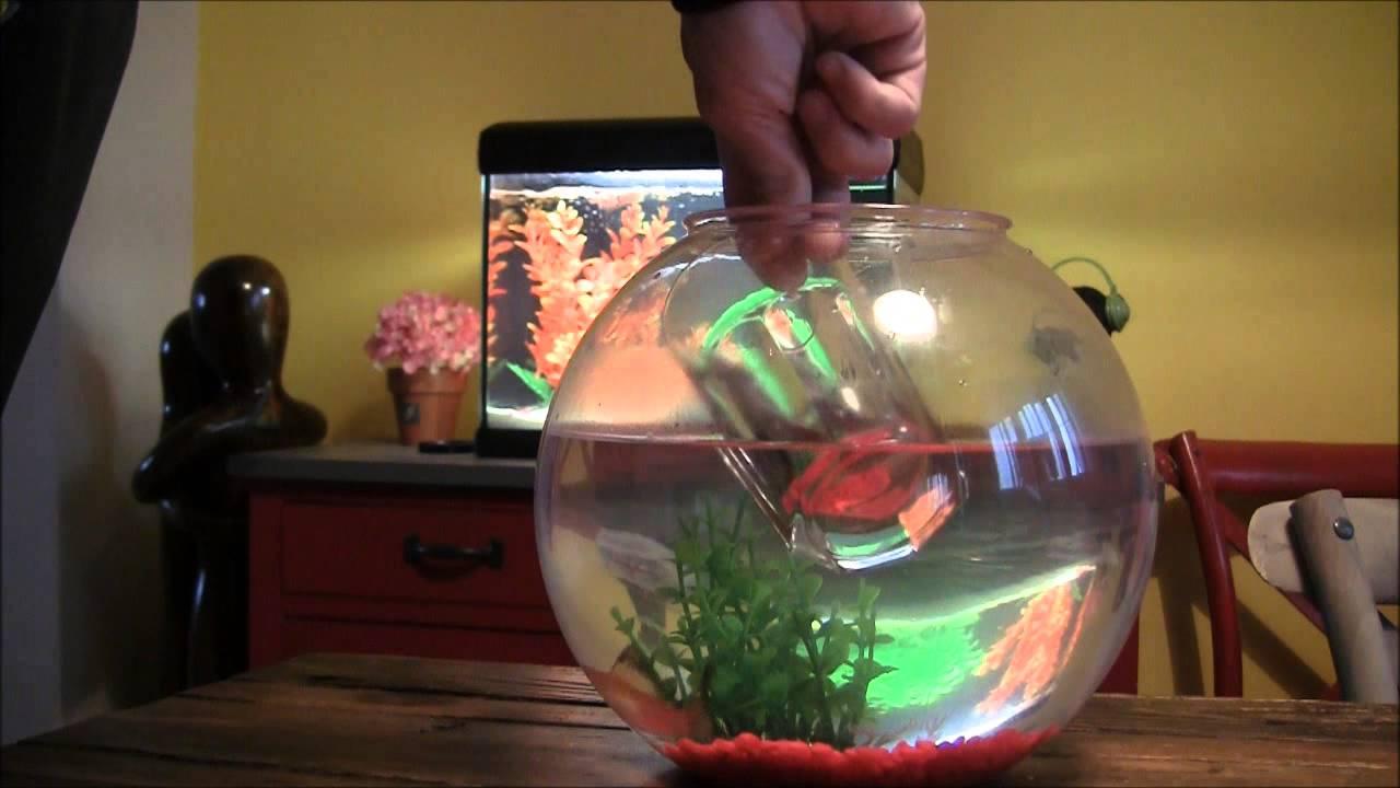 Come spostare il pesce rosso dalla boccia all 39 acquario for Sabbia per acquario pesci rossi