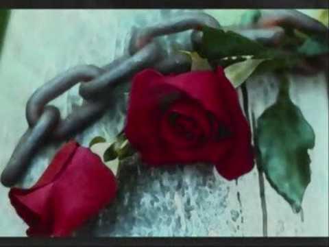 Bayhan Gürhan - Aşk Çiçeğim mp3 indir
