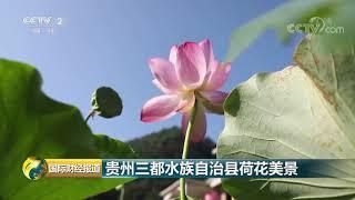 [国际财经报道]贵州三都水族自治县荷花美景| CCTV财经