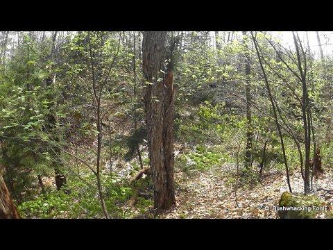 Descending to Raven Lake Road in Pepperbox Wilderness of Adirondack Park