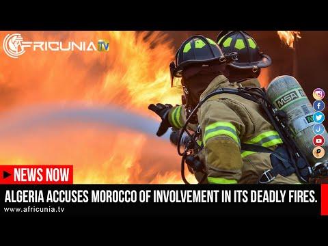 Local Aviation loses 1.6BN; Jihadist attack; Algeria accuses Morocco; Nigeria first gold medal