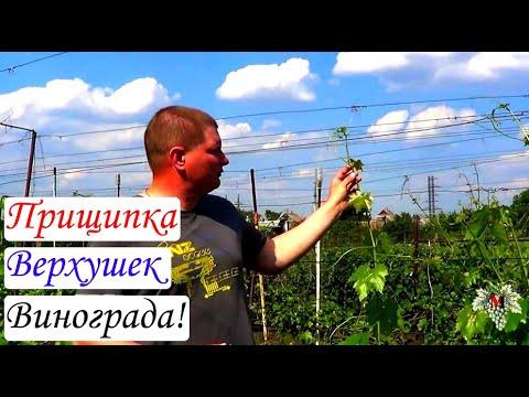 Как прищипывать виноград летом видео