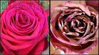 DIY Rose Drying    karagemma