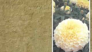 Выращивание однолетних цветов