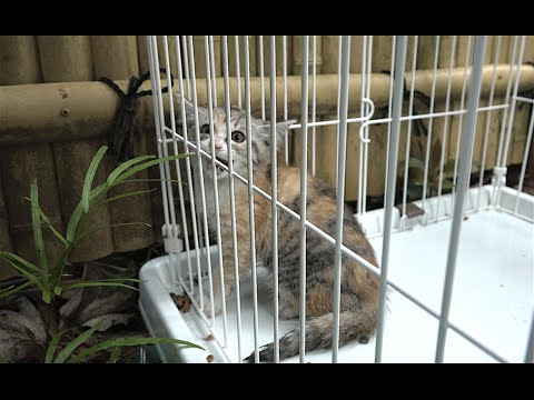 Feral cat Rescue. Foster Parents Wanted.  野良子猫を保護