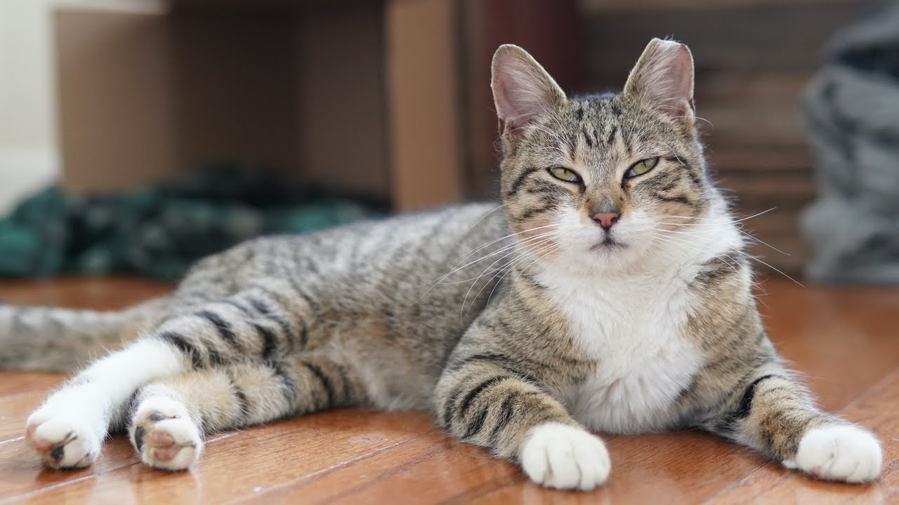 Frankie | The Colony Cats (Part 3)