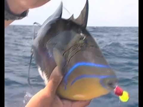Tropical Fish - Big Haul