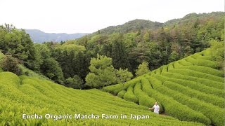 Encha Organic Matcha - From Farm to Cup