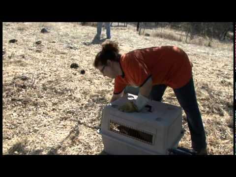 Fresno Wildlife Rescue and Rehabilitation Service