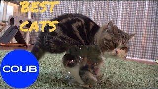 BEST COUB CATS#4, Лучшие котики Coub#4
