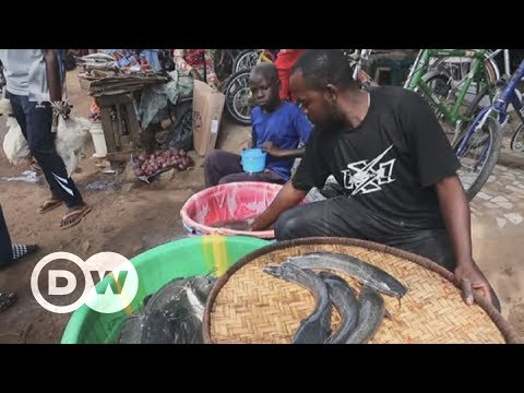 Rennajj Fish Farm: A haven for Nigerian wetland wildlife | DW English