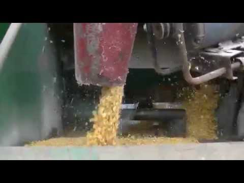 Blowing corn up the silo
