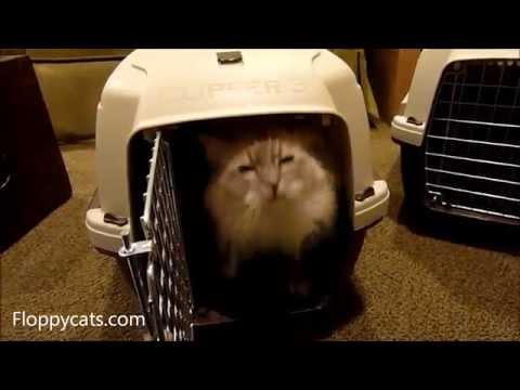 How to Assemble the Marchioro Clipper 3 Cayman Pet Carrier - ねこ - ラグドール - Floppycats