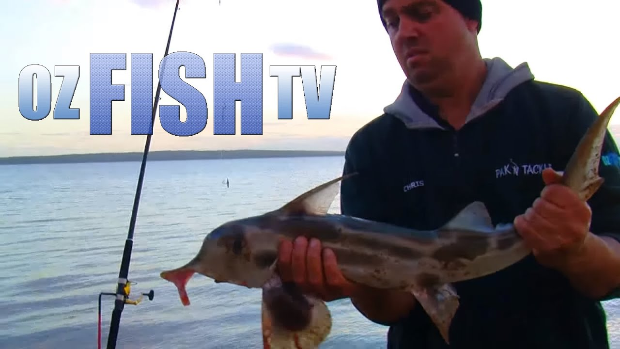 Download Oz Fish TV Season 2 Episode 3, Lang Lang, Land based Fishing