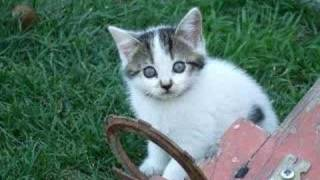 This is one paranoid kitten