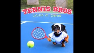 Video Super Smash Dachshund Tennis! Crusoe vs Oakley! download MP3, 3GP, MP4, WEBM, AVI, FLV September 2017